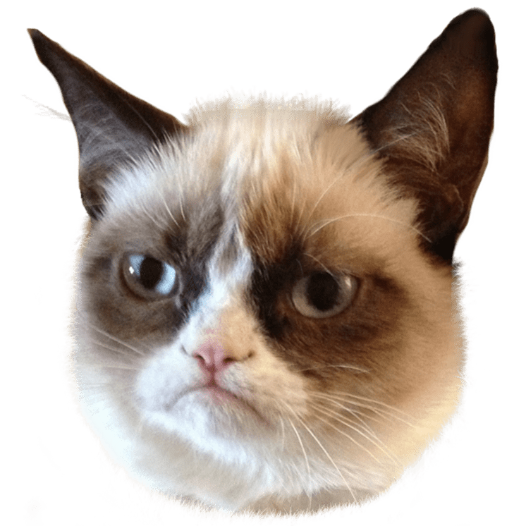 Clipart cat with tongue clip art freeuse stock Grumpy Cat Head Right transparent PNG - StickPNG clip art freeuse stock