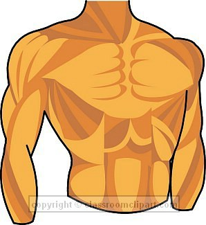 Clipart chest