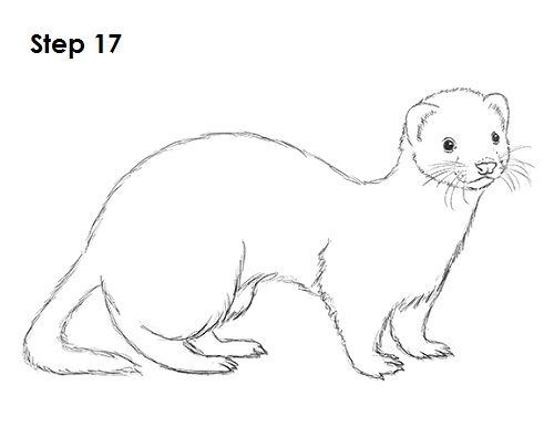 Clipart child with ferret jpg royalty free Ferret Sketch at PaintingValley.com | Explore collection of Ferret ... jpg royalty free