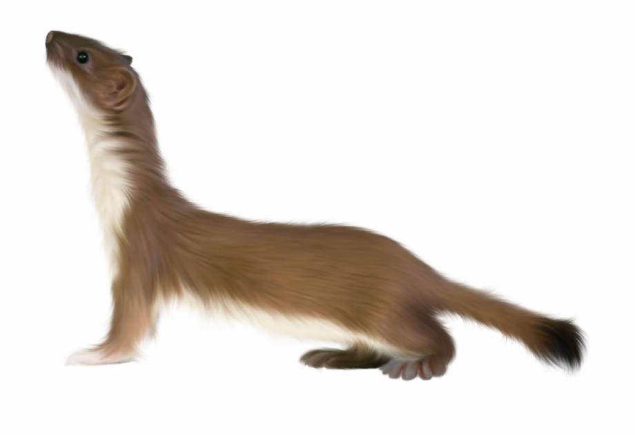 Clipart child with ferret jpg black and white library Ferret Png - Small Animals Transparent Background Free PNG Images ... jpg black and white library
