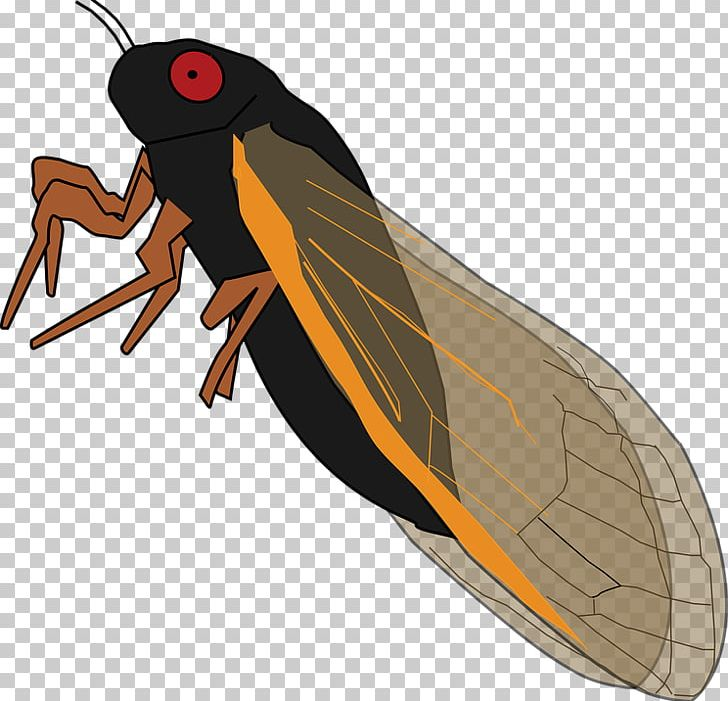 Clipart cicades vector freeuse library Insect Periodical Cicadas True Bugs Cicadidae PNG, Clipart, Animals ... vector freeuse library
