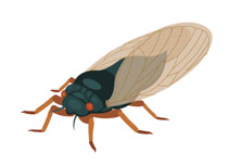 Clipart cicades clipart free stock Search Results for cicada - Clip Art - Pictures - Graphics ... clipart free stock