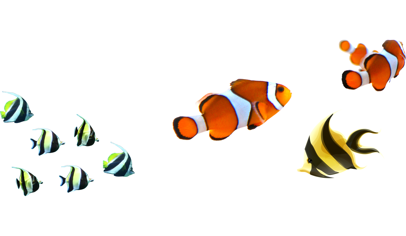 Clipart clown fish picture free Angelfish Clownfish Clip art - Fish Pictures 1664*969 transprent Png ... picture free