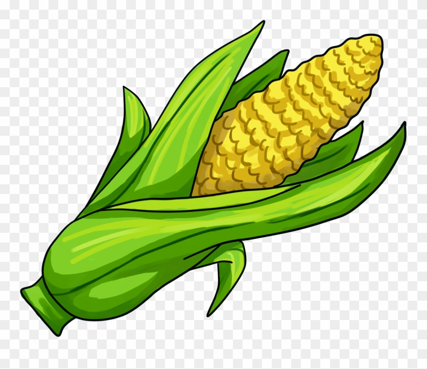 Clipart cob jpg freeuse library Corn On The Cob Maize Clip Art - Corn Illustration Png Transparent ... jpg freeuse library