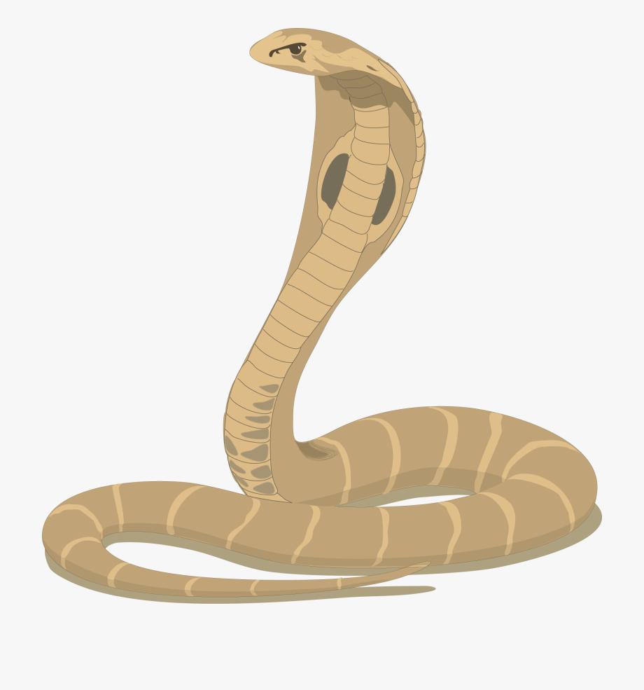 Clipart cobra snake png transparent download Cobra Snake Cartoon - King Cobra Snake Clipart #356974 - Free ... png transparent download