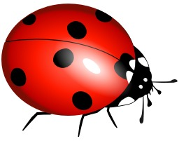 Coccinelle clipart image black and white Clipart coccinelles PNG and cliparts for Free Download - Clipart ... image black and white