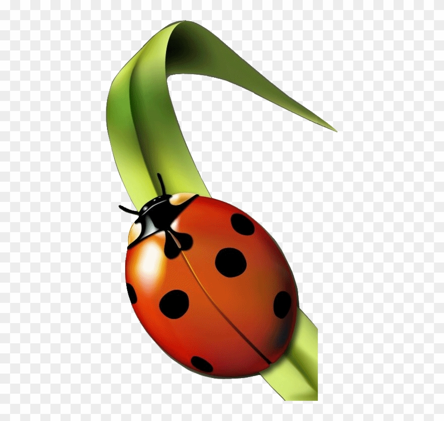 Clipart coccinelles clipart freeuse stock Coccinelle - Jardin Clipart (#397323) - PinClipart clipart freeuse stock