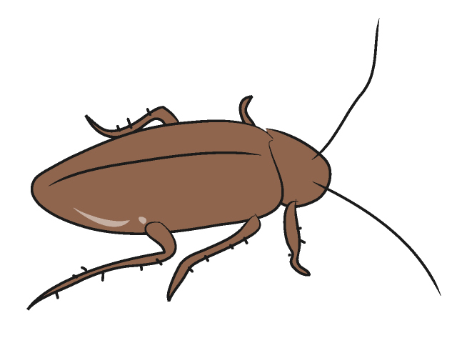 Cockroach images clipart svg download Free Cockroaches Cliparts, Download Free Clip Art, Free Clip Art on ... svg download