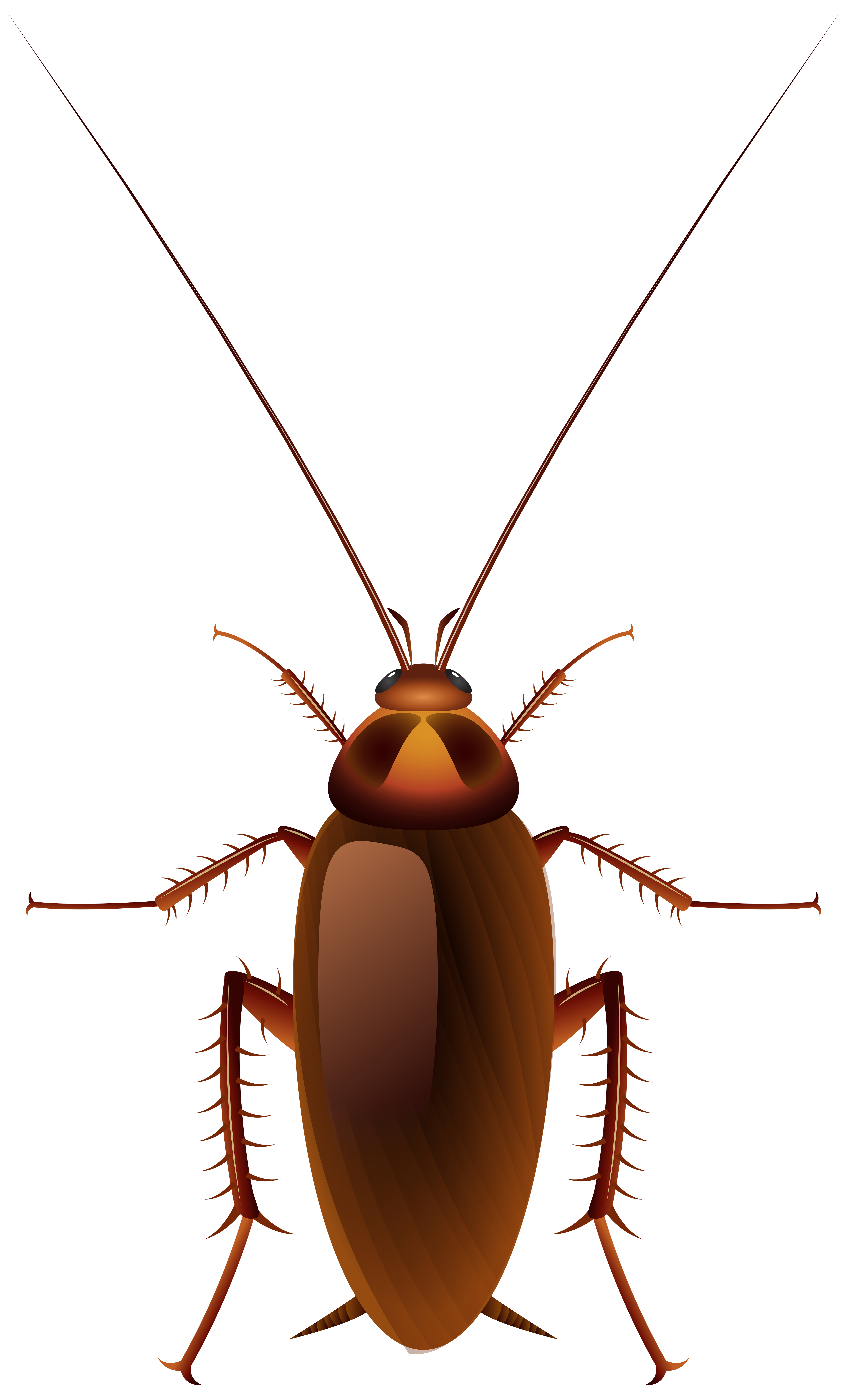 Cokeroach clipart png library download Cockroach PNG Clip Art - Best WEB Clipart png library download
