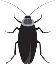 Cockroach images clipart banner transparent download Search Results for cockroach - Clip Art - Pictures - Graphics ... banner transparent download