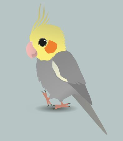 Clipart cockatiel jpg black and white library Clipart cockatiel 2 » Clipart Portal jpg black and white library