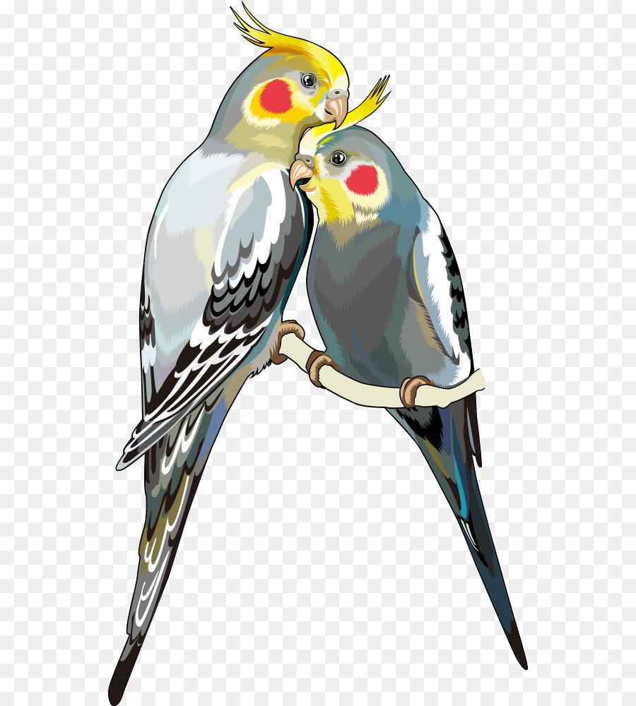 Clipart cockatiel clip art transparent Bird Parrot png download - 594*1000 - Free Transparent Cockatiel png ... clip art transparent