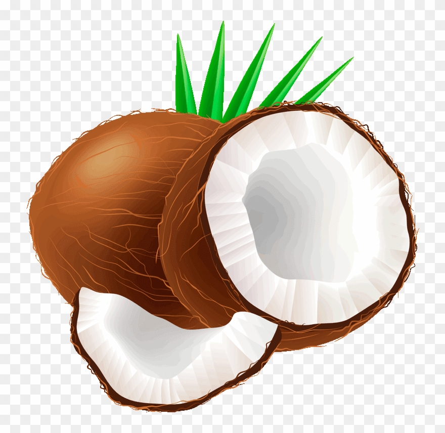 Coconut clipart image clipart free stock Coconut Clipart - Coconut Fruit Clipart - Png Download (#204396 ... clipart free stock