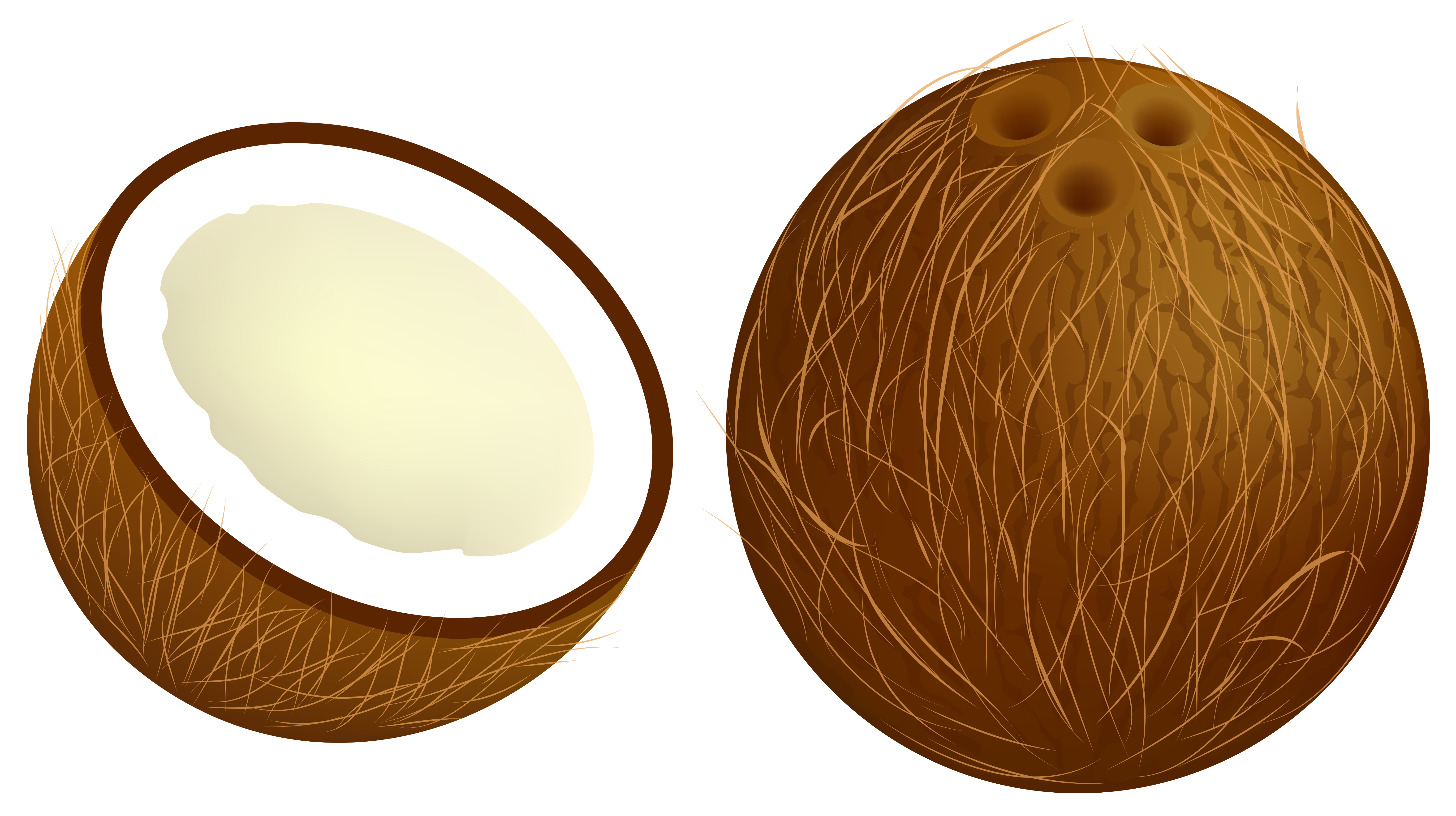 Clipart coconut picture library stock Coconut PNG Vector Clipart Image | Gallery Yopriceville - High ... picture library stock