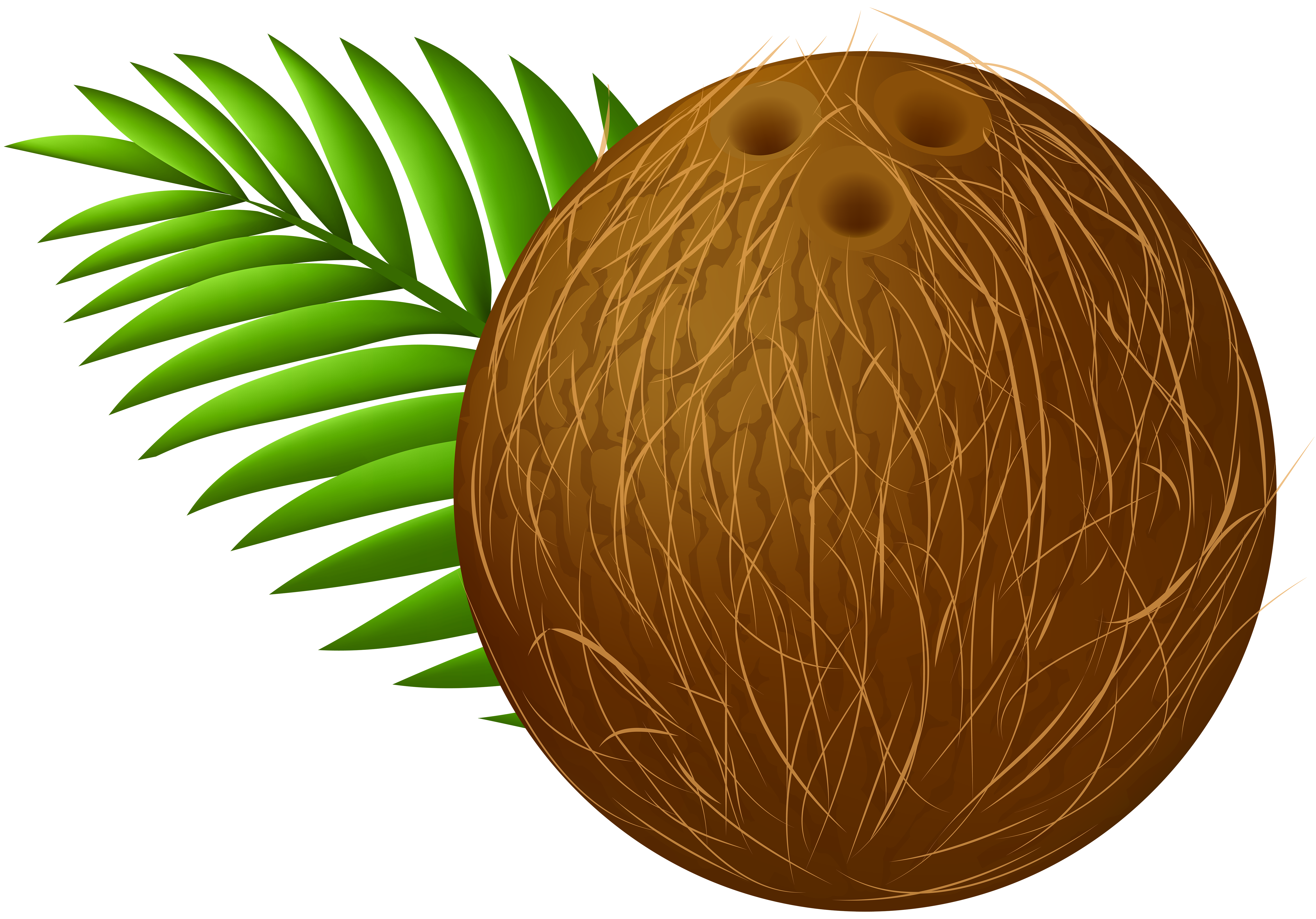 Clipart coconut image library library Coconut Transparent PNG Clip Art Image | Gallery Yopriceville ... image library library