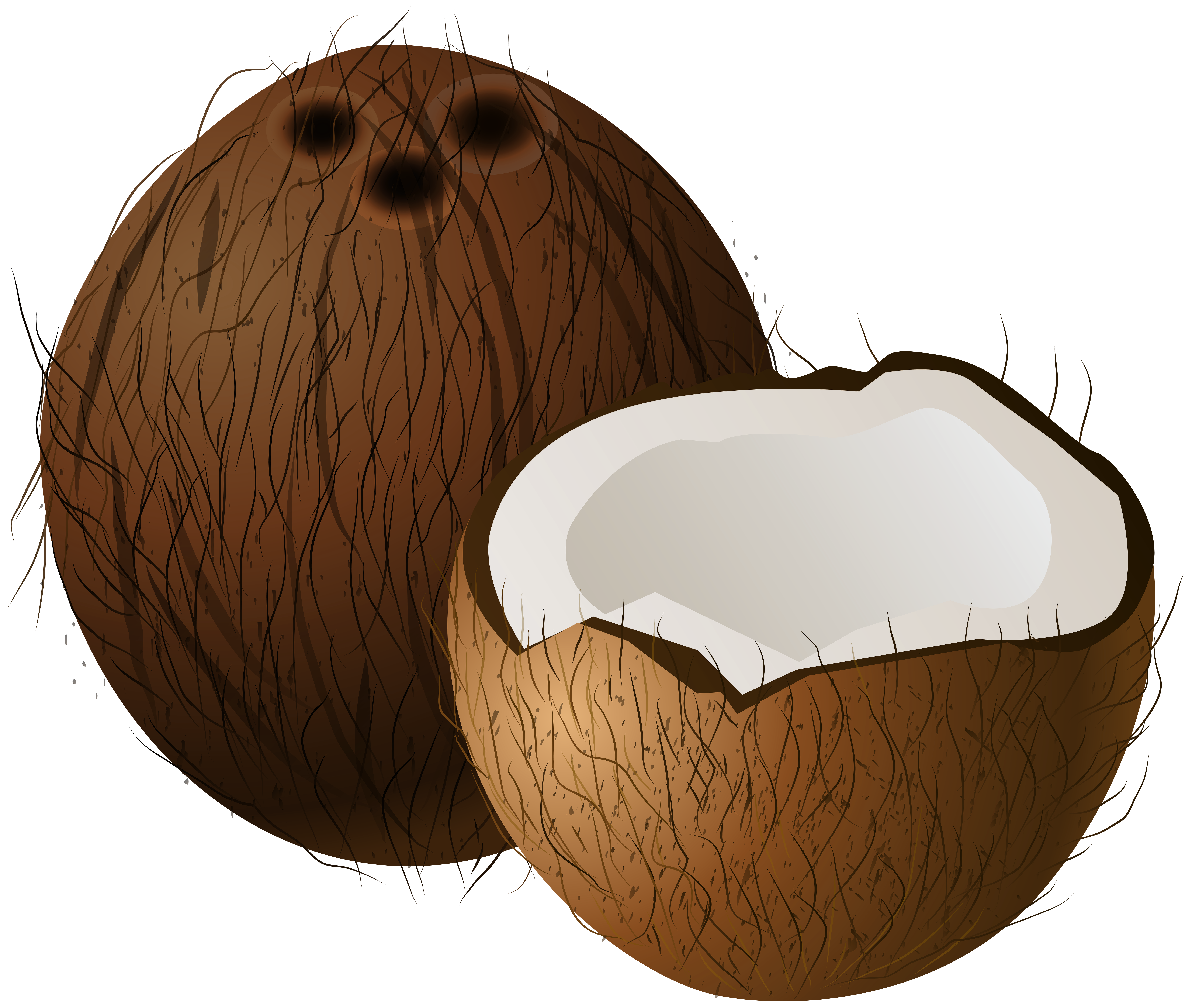 Clipart coconut svg black and white library Coconuts PNG Clip Art - Best WEB Clipart svg black and white library