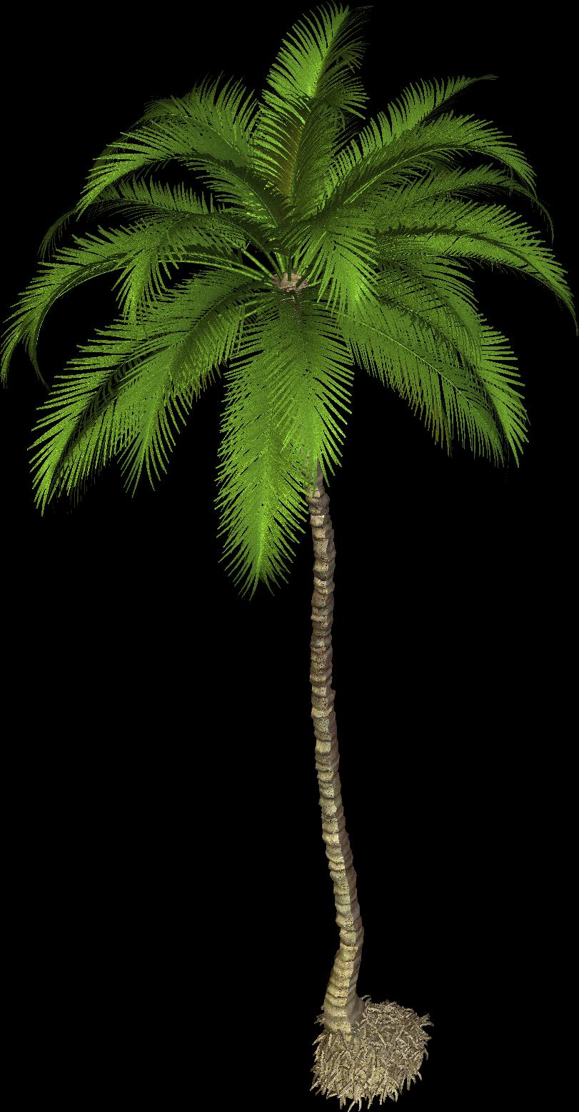 Clipart coconut tree banner stock Coconut Tree PNG Photo | PNG Mart | tree | Pinterest banner stock