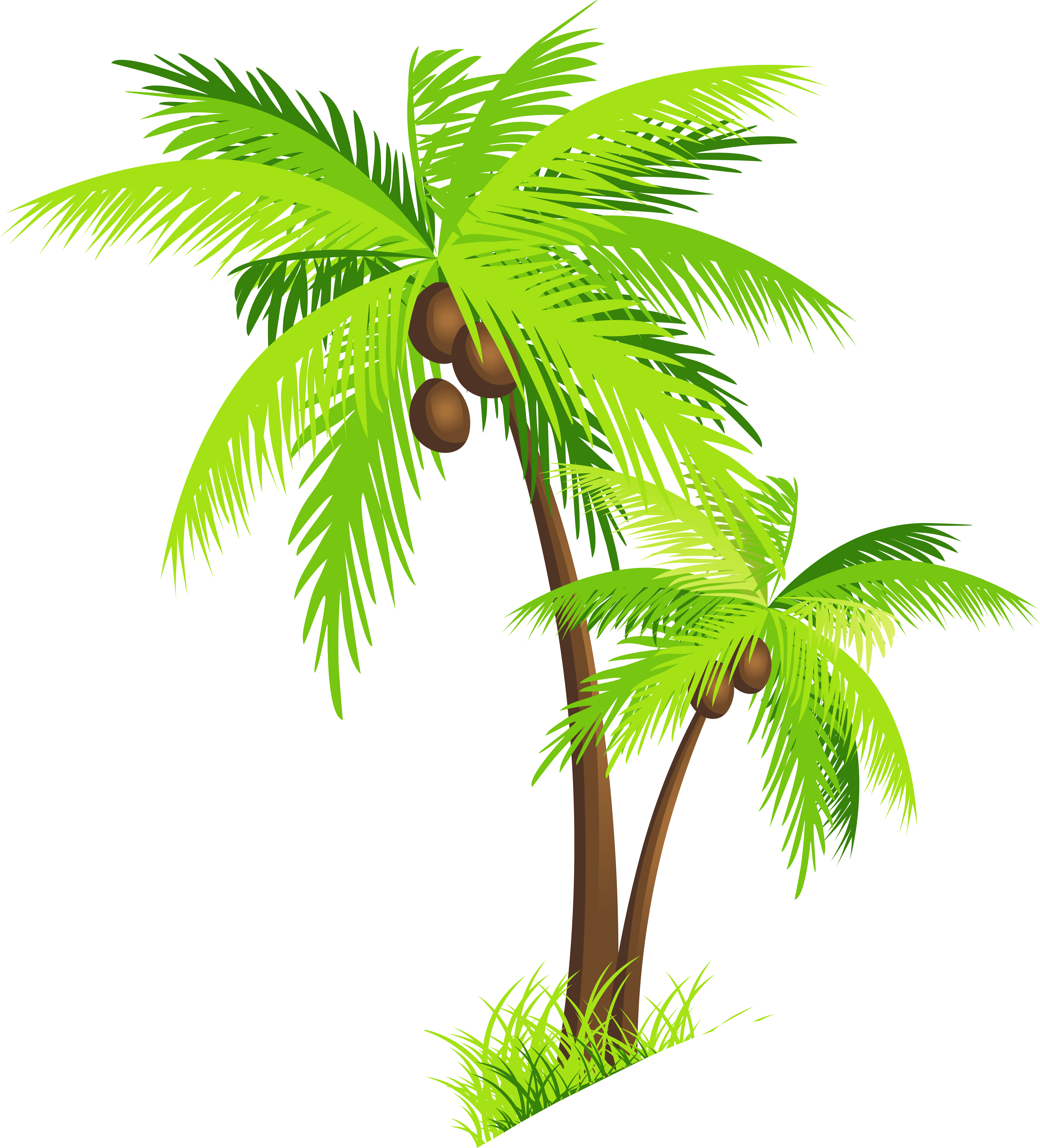 Clipart coconut tree picture Coconut Tree Clipart at GetDrawings.com | Free for personal use ... picture