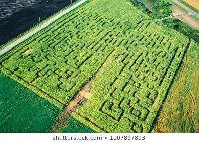 Clipart corn maze library Corn maze clipart 3 » Clipart Portal library