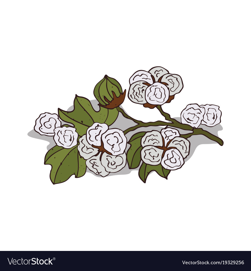 Clipart cotton picture royalty free download Isolated clipart cotton picture royalty free download