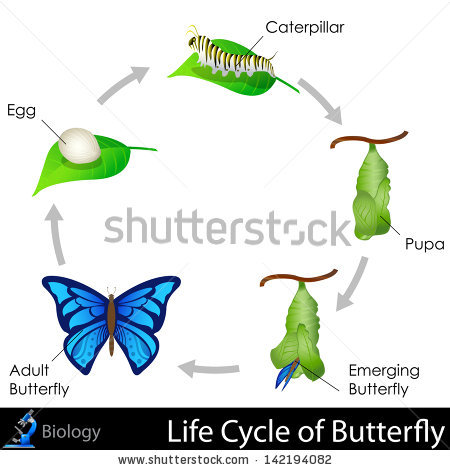 Clipart cycle diagram clipart free stock Life-cycle Stock Images, Royalty-Free Images & Vectors | Shutterstock clipart free stock