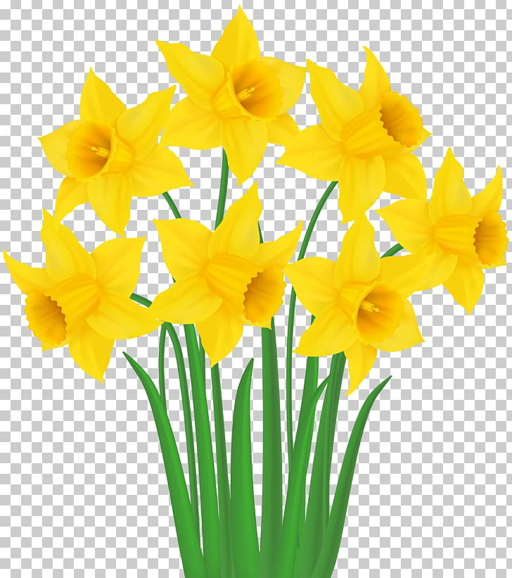 Clipart daffodils clip art transparent download Daffodil PNG, Clipart, Amaryllis Family, Clipart, Cut Flowers ... clip art transparent download