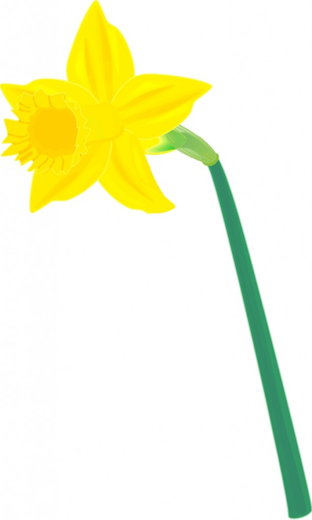 Clipart daffodils picture black and white stock Free Daffodil Cliparts, Download Free Clip Art, Free Clip Art on ... picture black and white stock