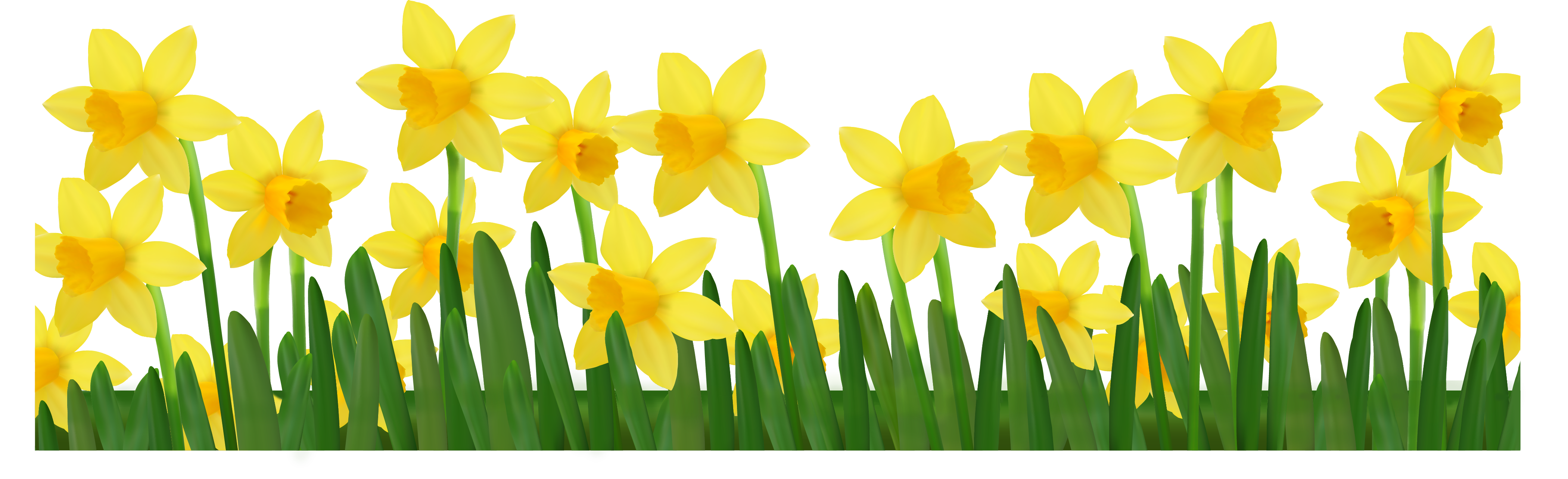 Daffodil border clipart vector freeuse download Grass with Daffodils PNG Clipart Picture | Gallery Yopriceville ... vector freeuse download