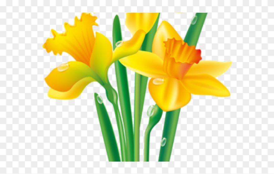 Clipart daffodils png free library Daffodil Clipart Yellowflower - Daffodil Clipart - Png Download ... png free library