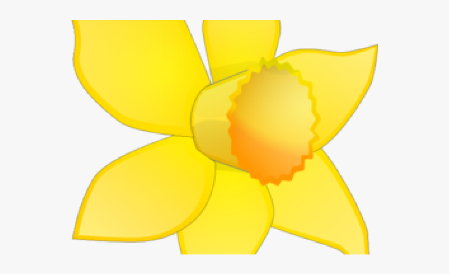 Daffodils clipart banner free library Daffodils Clipart Flower Arrangement - Orchid #2095573 - Free ... banner free library