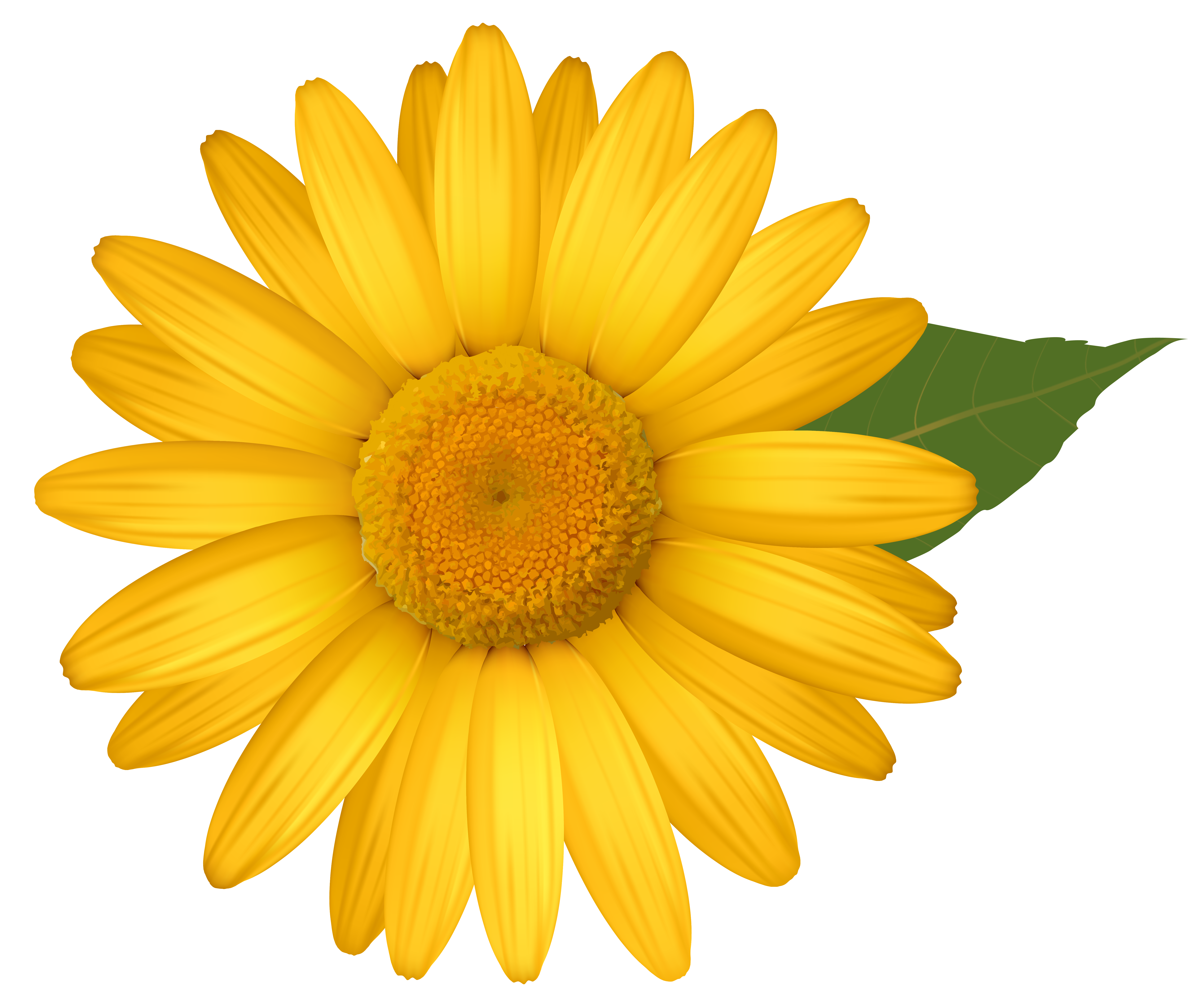 Daisy flower clipart clipart library download Yellow Daisy PNG Image | Gallery Yopriceville - High-Quality Images ... clipart library download