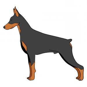 Clipart doberman picture free Head Of Doberman With Spiked Dog Collar Vector Clipart | SOIDERGI picture free