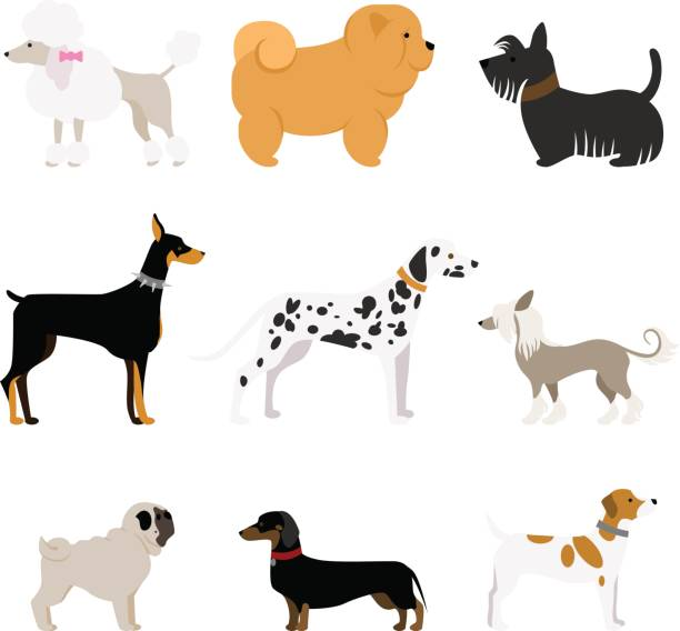 Clipart dog bigand small png black and white Drawing Of A Big And Small Clip Art, Vector Images & Illustrations ... png black and white