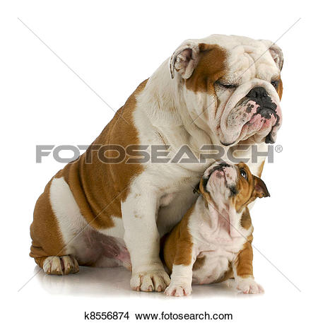 Clipart dog bigand small banner black and white download Stock Photo of big and small dog k8556874 - Search Stock Images ... banner black and white download