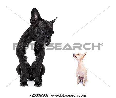 Clipart dog bigand small banner freeuse stock Pictures of two big and small dogs k25309308 - Search Stock Photos ... banner freeuse stock