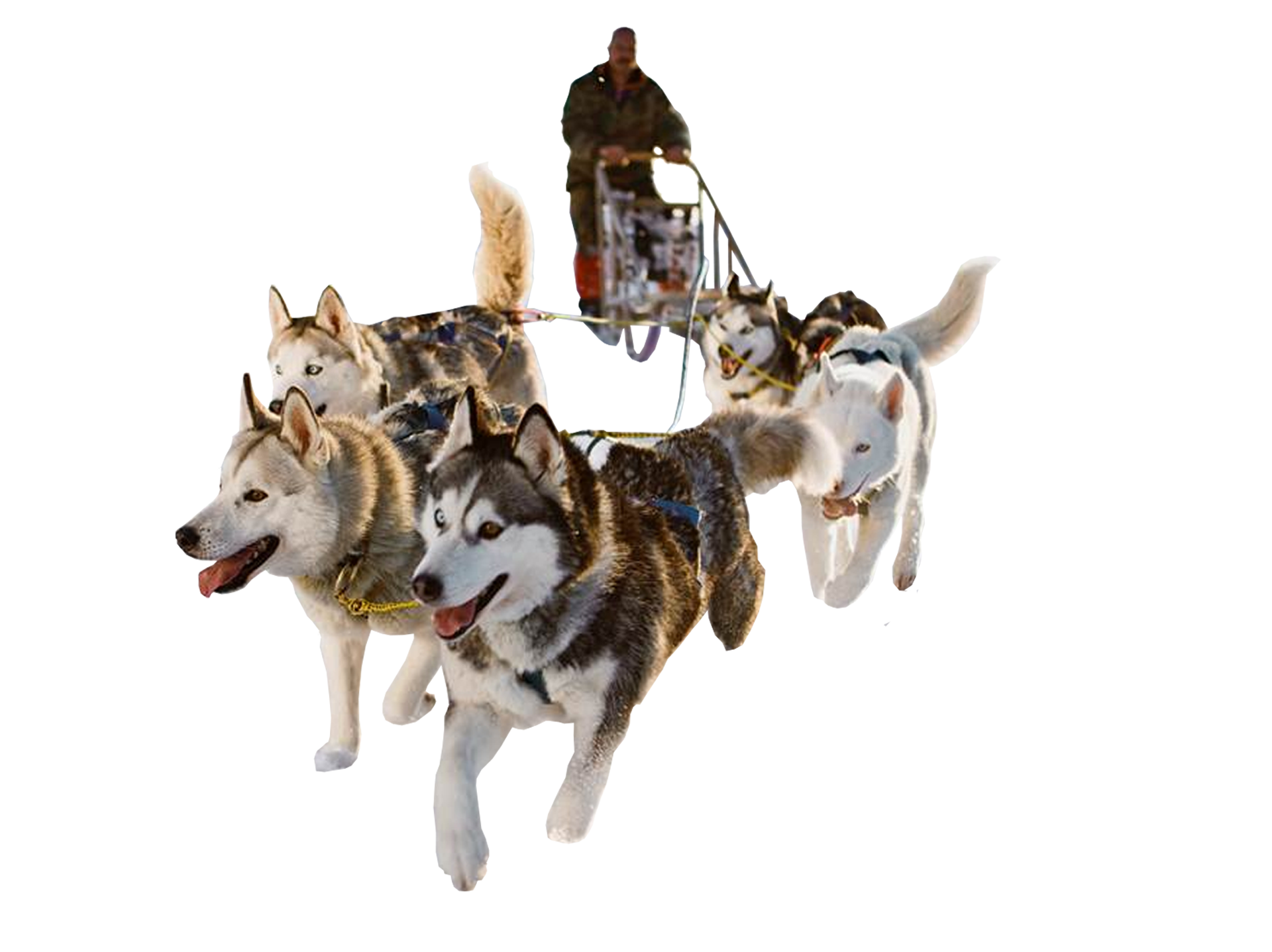 Dog sledding clipart clip library download Sled Dog PNG HD Transparent Sled Dog HD.PNG Images. | PlusPNG clip library download