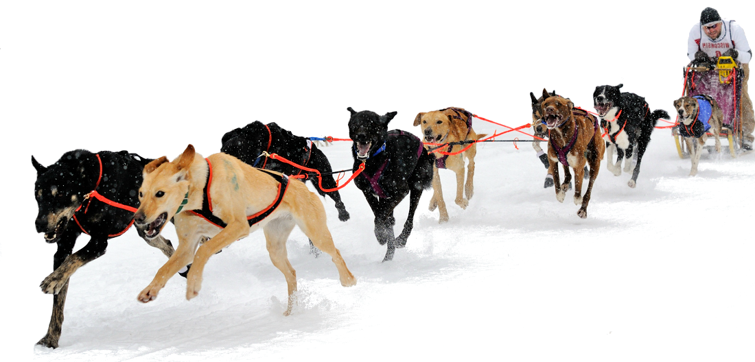 Clipart dog sled