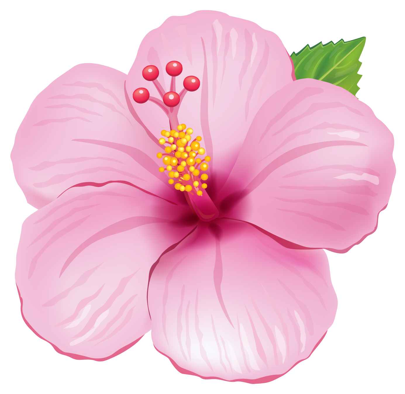 Clipart dtgtdg image royalty free Free collection of Flowers clipart png. Download transparent clip ... image royalty free