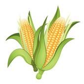 Ear of corn clipart clip library download Ear corn Illustrations and Clipart. 365 ear corn royalty free ... clip library download
