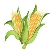 Clipart ear of corn png stock Ear corn Illustrations and Clipart. 365 ear corn royalty free ... png stock