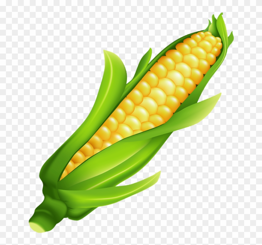 Clipart ear of corn image free download Milho Ear Of Corn Ears Of Corn, Food Clipart, Fruits - Mazorca De ... image free download