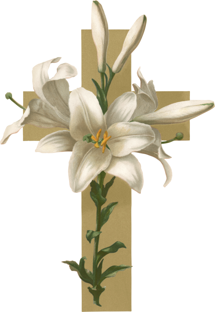 Easter lily christian flower. Cross lilies clipart
