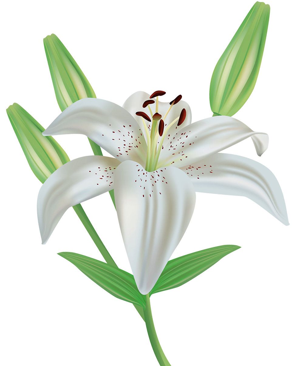 Flower clipart images graphic stock Lily Flower Clipart PNG Image | Gallery Yopriceville - High-Quality ... graphic stock