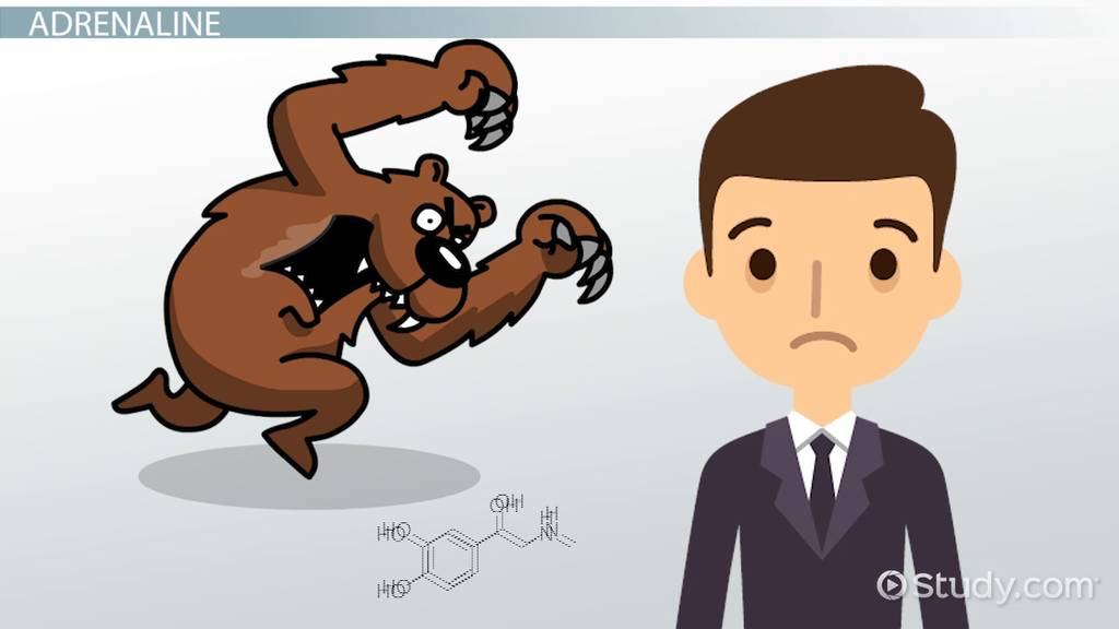 Clipart fighting videos clipart library library Fight or Flight Response: Definition, Physiology & Examples - Video ... clipart library library