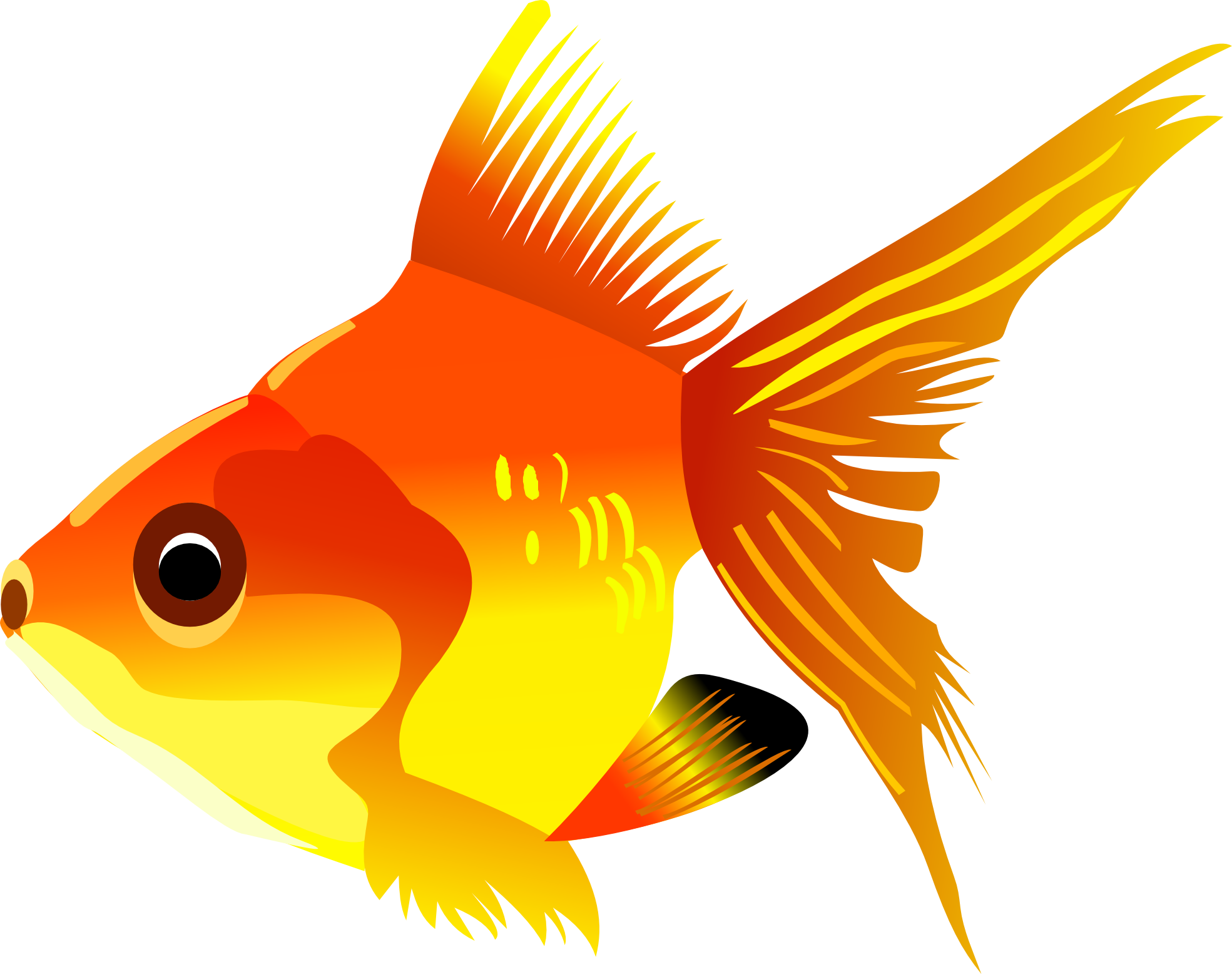 Fifteen isolated stock photo. Fish swimming clipart