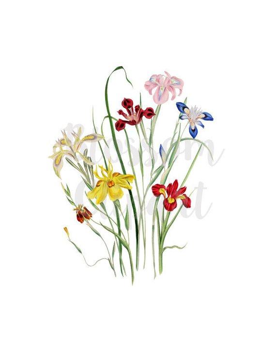Clipart florals clipart transparent stock Clipart Florals, Vintage Florals Clipart, wedding clipart, floral ... clipart transparent stock