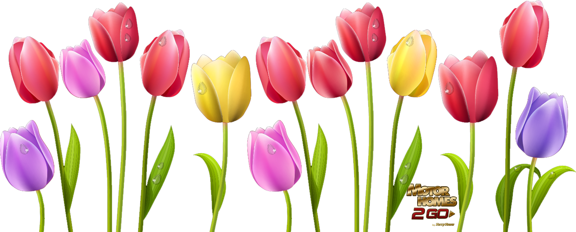 Tulip flower clipart graphic royalty free library Tulip Flower Clipart | jokingart.com Tulip Clipart graphic royalty free library