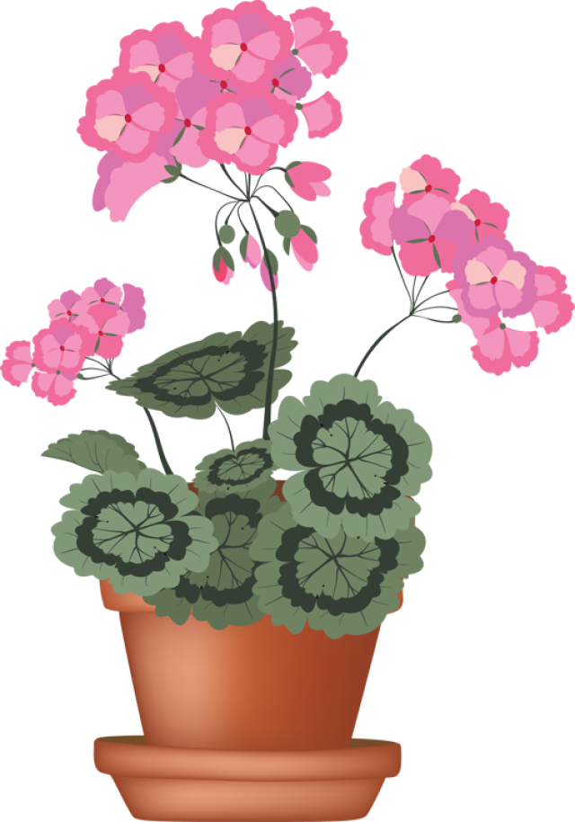 Clipart flower in pot image free library Clip Art of beautiful plants for the spring garden: Geranium | FAVE ... image free library