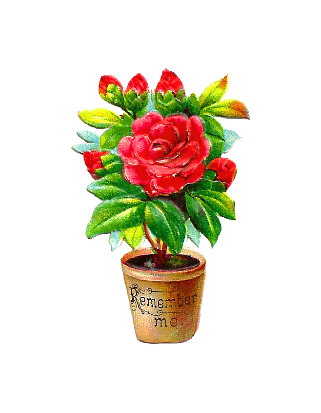 Flower in a pot clipart free download Antique Images: Free Flower Clip Art: Red Peony Bush in Pot Remember Me free download
