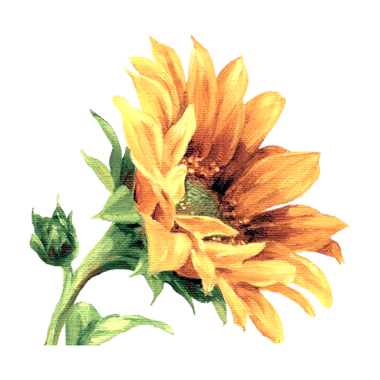 Clipart flower patterns graphic freeuse stock Çiçekler PNG Clipart_Lisa Audit_(69 Adet)   Dekupaj Desenleri ... graphic freeuse stock